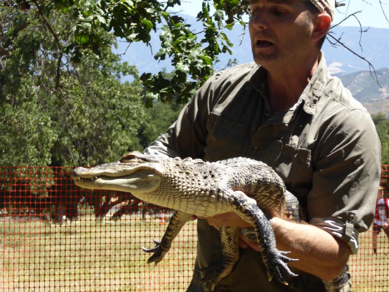 SW - Alligator